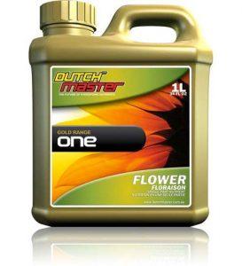 dutch-master-one-flower